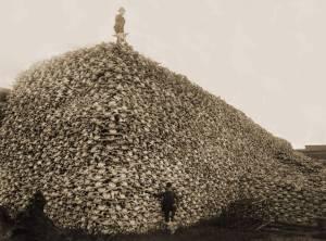 Buffalo-Skulls-1870