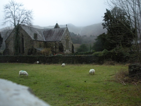 sheep church