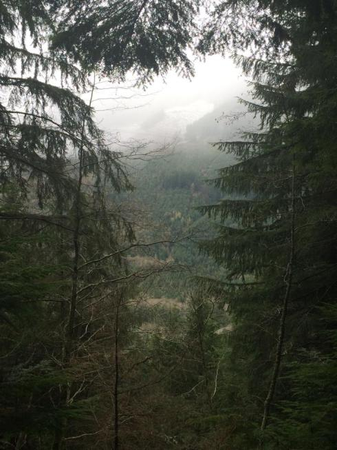 rainier view