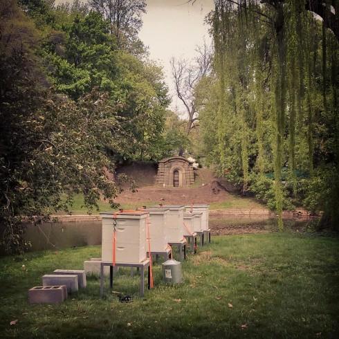 Grave Honey Bees