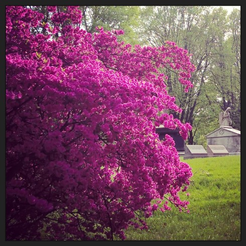 Purple Bush Grave